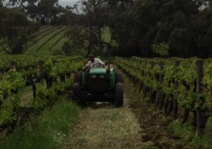 Dodge plough orchard chardy 2013