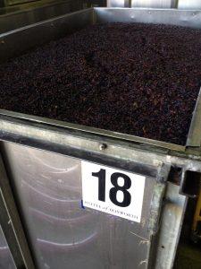 PN ferment