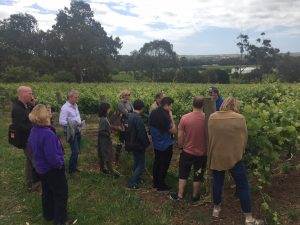 wset-tour-nov-2016-vineyard