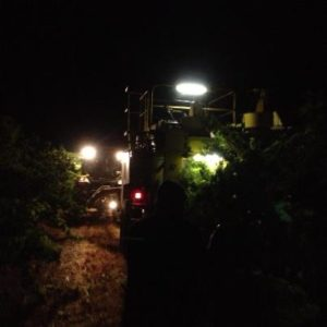 Night picking